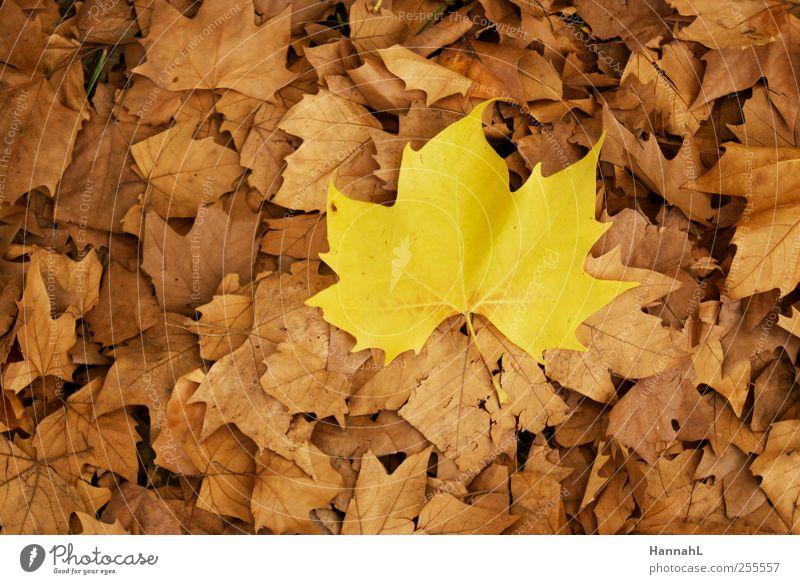 sei anders!! Pflanze Blatt ruhig gelb Herbst einzigartig dehydrieren Vogelperspektive Perspektive