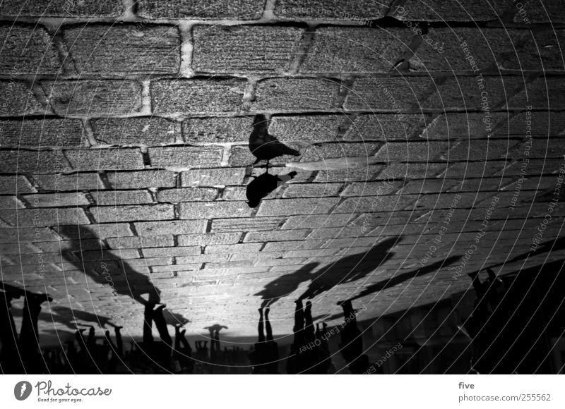 wiener stadtleben Mensch Stadt Ferien & Urlaub & Reisen Tier dunkel Stimmung Beine hell Fuß gehen Ausflug Platz Abenteuer Tourismus Bodenbelag Menschenmenge