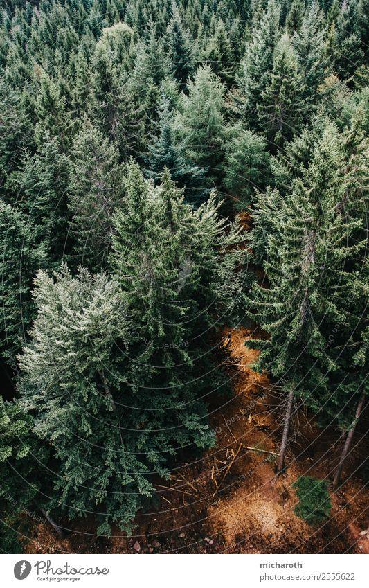 Tannenwald Gesundheit Gesundheitswesen Wellness Ferne Freiheit wandern Umwelt Natur Pflanze Tier Erde Klima Klimawandel Schönes Wetter Baum Wald Urwald Glück