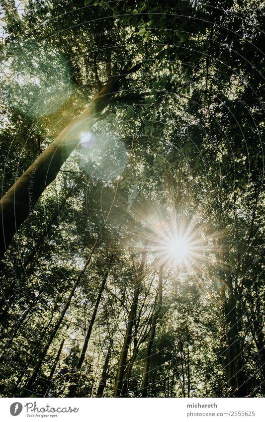 Sonne gegen Bäume Natur Sommer grün Baum Erholung Wald Wärme gelb Umwelt Frühling Freundschaft hell Wetter Erfolg Kreativität
