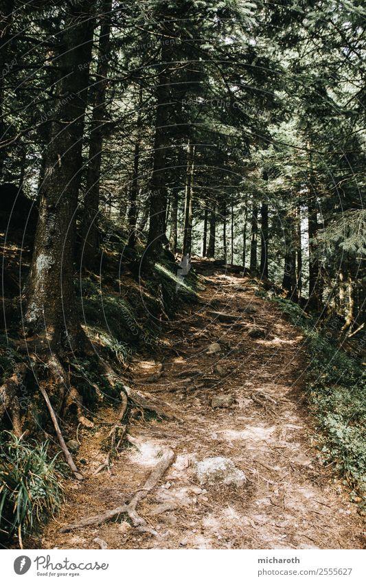Weg im Wald Gesundheit sportlich Zufriedenheit Tourismus Ausflug Abenteuer Umwelt Natur Pflanze Tier Erde Frühling Sommer Klima Klimawandel Baum Gras Urwald
