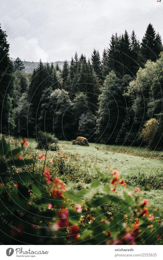 Lichtung Natur Ferien & Urlaub & Reisen Pflanze grün Landschaft rot Baum Blume Erholung Wolken Tier Wald Gesundheit Umwelt Wiese Gras