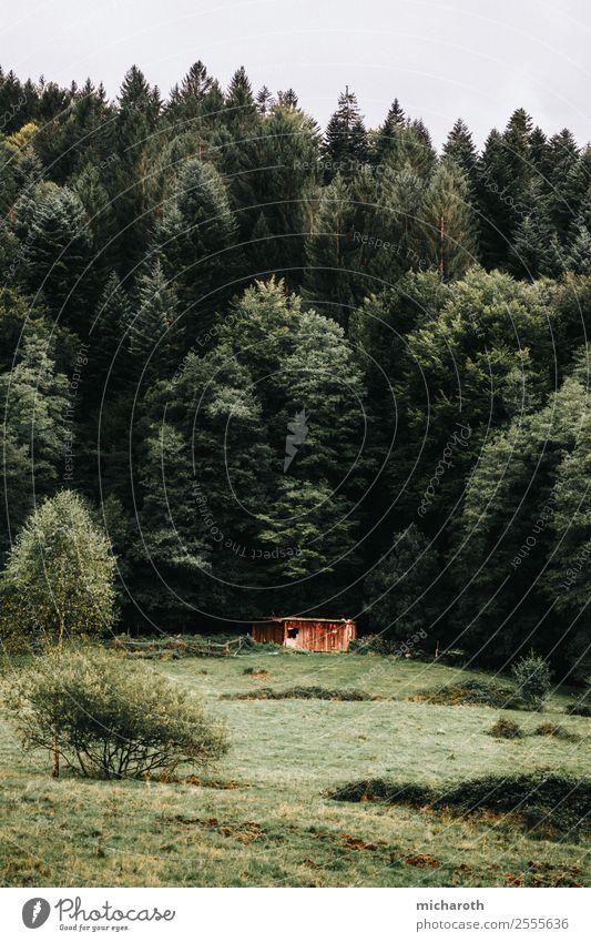 Wald hinter der Hütte Gesundheit Ferien & Urlaub & Reisen Ausflug Abenteuer wandern Energiewirtschaft Umwelt Natur Frühling Klima Klimawandel Wetter Baum Gras
