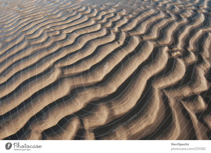 Minidünen Natur Meer Strand Sand Küste braun Wellen ästhetisch Düne Schönes Wetter Sandstrand beruhigend Sandbank Naturphänomene