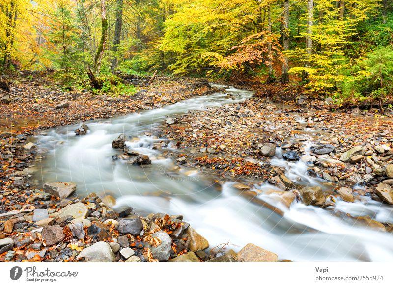 Natur Ferien & Urlaub & Reisen Sommer blau Pflanze schön Farbe grün Wasser Landschaft weiß Baum rot Blatt Wald schwarz