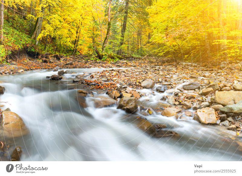 Fluss im Herbstwald mit bunten Bäumen schön Ferien & Urlaub & Reisen Abenteuer Sonne Umwelt Natur Landschaft Wasser Sonnenaufgang Sonnenuntergang Sonnenlicht