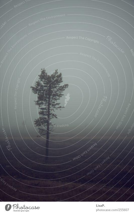 ein männlein steht im walde Natur Baum Pflanze Einsamkeit Wolken Landschaft dunkel Herbst Gras Horizont Stimmung Erde Angst Nebel Hügel Sehnsucht