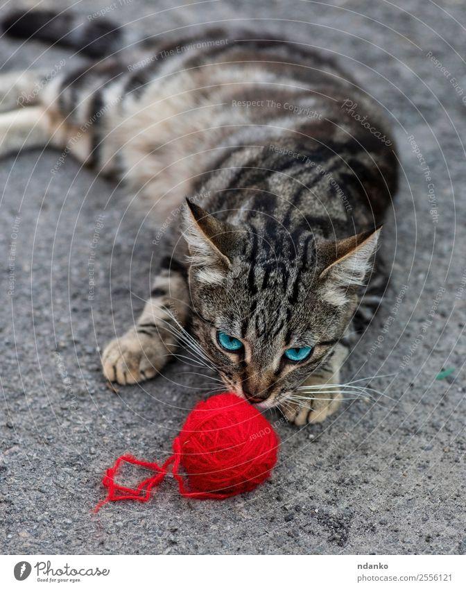 Katze Sommer Farbe rot Erholung Tier Freude grau Stimmung niedlich Haustier Säugetier gestreift Katzenbaby heimisch