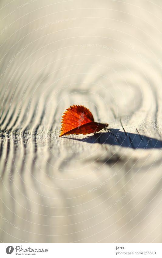 kleinigkeiten schön Pflanze rot Blatt ruhig Herbst Holz klein natürlich Gelassenheit Schönes Wetter Optimismus geduldig Holzstruktur