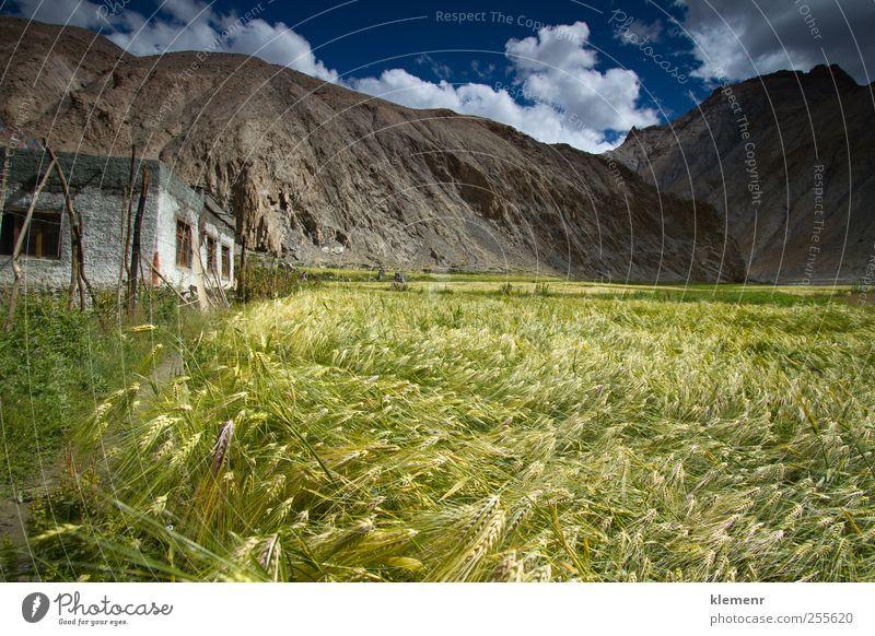 Weizenfeld im Marhka-Tal nahe der Stadt Leh Indien Natur Landschaft Erde Wolken Pflanze Feld Hügel Berge u. Gebirge Dorf Haus gebrauchen genießen