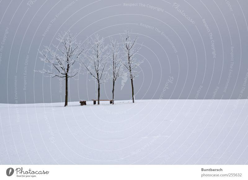 Bankwächter Himmel weiß Baum Winter ruhig kalt Schnee Landschaft grau Eis trist Frost Bank Winterurlaub Rastplatz