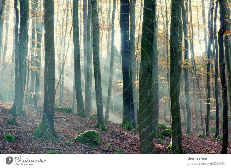 There is a light.... Natur grün Baum rot Landschaft Blatt ruhig Tier Wald Umwelt gelb Herbst Glück braun Stimmung rosa
