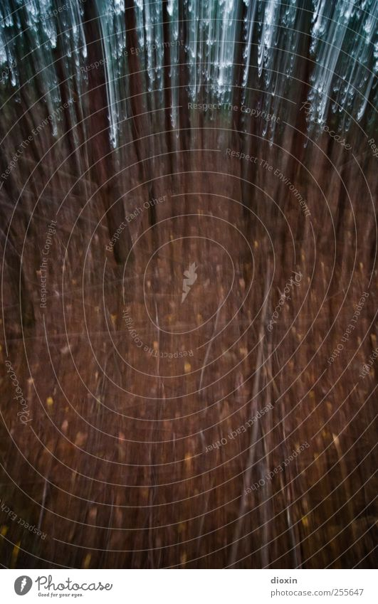Run Baby Run Baum Baumstamm Wald laufen gruselig trashig Todesangst Angst Waldboden Farbfoto Außenaufnahme Experiment abstrakt Menschenleer Tag Unschärfe