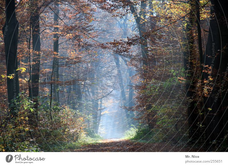 what a wonderful world Umwelt Natur Landschaft Herbst Klima Baum Sträucher Wald Idylle ästhetisch herbstlich Herbstfärbung Herbstlaub Spaziergang Spazierweg