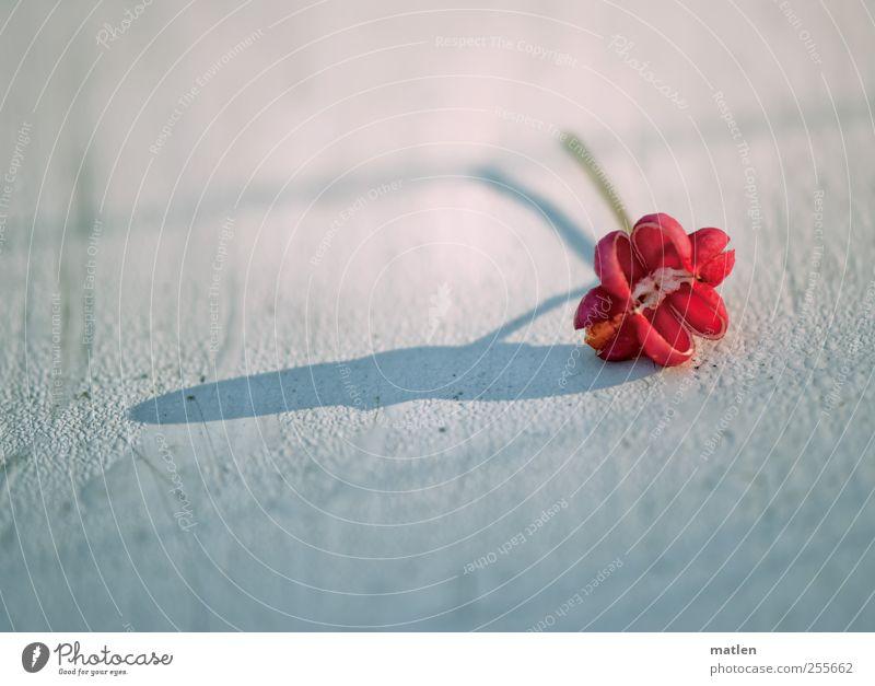 peanut weiß Pflanze rot Herbst Wassertropfen Holzbrett