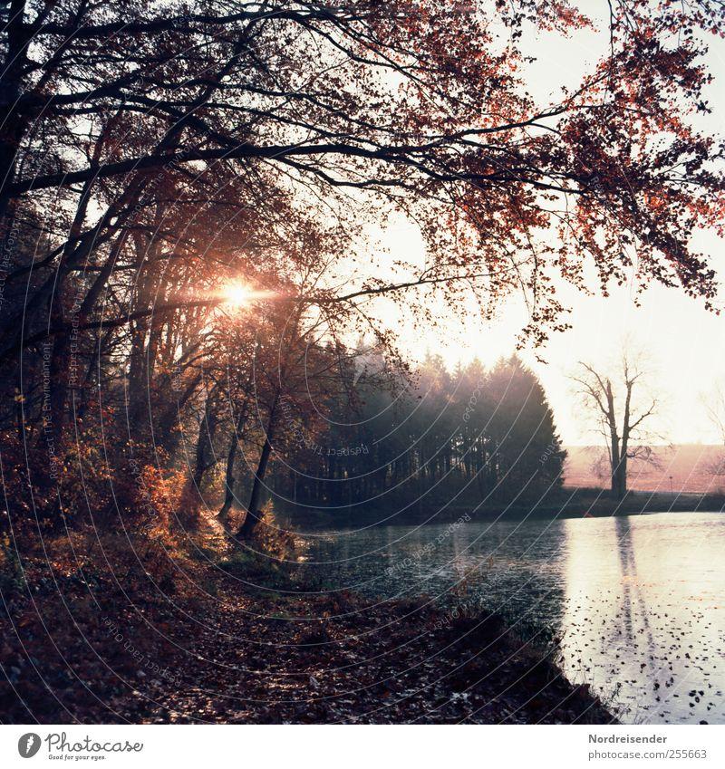 November Erholung ruhig Duft Ausflug Natur Landschaft Sonne Sonnenlicht Herbst Klima Schönes Wetter Wald Teich entdecken geheimnisvoll Sinnesorgane Stimmung