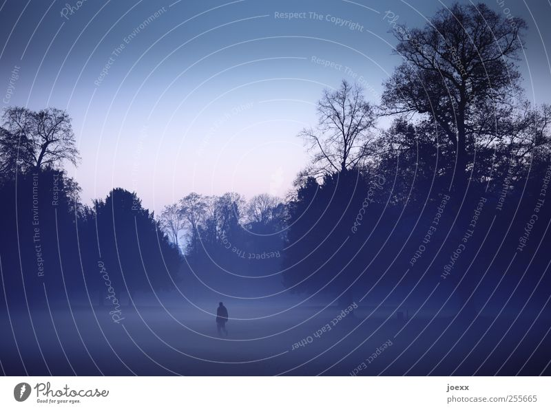 Wir sind allein 1 Mensch Natur Luft Wolkenloser Himmel Herbst Nebel Baum Park gehen dunkel gruselig kalt blau rosa schwarz Stimmung Vorsicht ruhig träumen