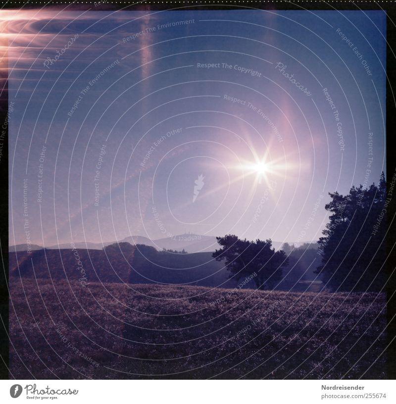 Schwächen einer Lady Berge u. Gebirge Natur Landschaft Himmel Sonne Sonnenlicht Schönes Wetter Baum Wiese Linie Streifen Blick außergewöhnlich Kreativität