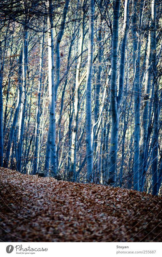 entlang Natur Landschaft Pflanze Baum Blatt Grünpflanze Wildpflanze Garten Park Feld Wald Berge u. Gebirge entdecken Blick leuchten streichen alt Coolness