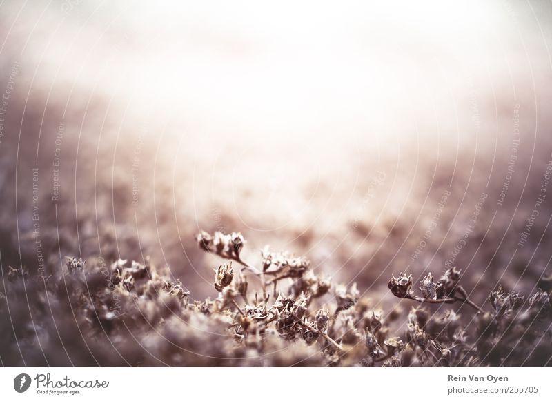 Pflanze & Licht Umwelt Natur Sträucher Moos Blatt Wildpflanze schön braun Stimmung Unschärfe Tiefenschärfe Farbfoto Außenaufnahme Detailaufnahme Makroaufnahme