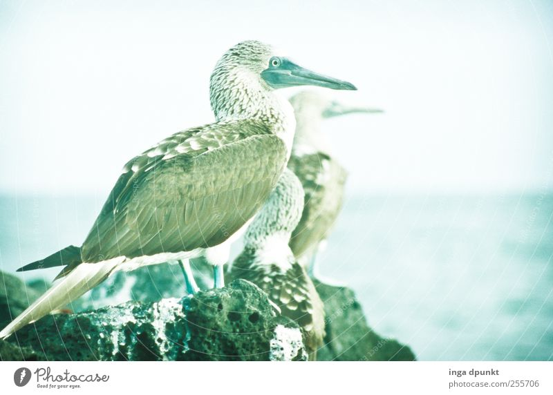 Herrliche Aussichten Natur Meer Tier Umwelt Landschaft Küste Vogel warten Abenteuer Insel Wildtier Urelemente beobachten analog Naturschutzgebiet Südamerika