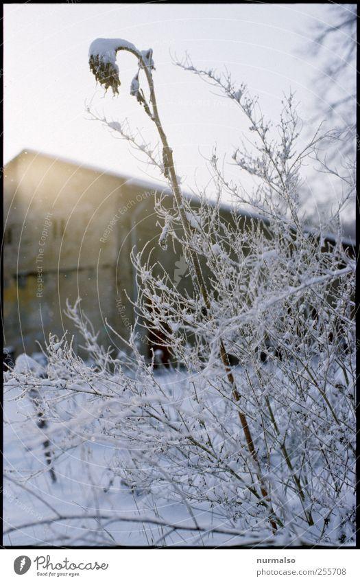 frosti 1. Dezember Natur Pflanze Winter Tier kalt Schnee Umwelt Garten Stimmung Kunst Eis Feste & Feiern glänzend ästhetisch Klima Lifestyle