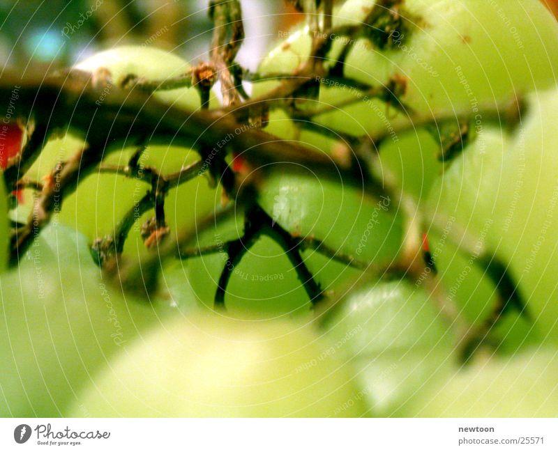 Weintrauben Natur Ernährung saftig