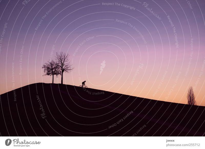 Talfahrt Fahrradfahren 1 Mensch Wolkenloser Himmel Sonnenaufgang Sonnenuntergang Schönes Wetter Baum Hügel Bewegung violett rot schwarz Freude Freizeit & Hobby