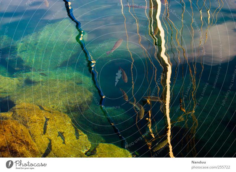 Wahrnehmungsebenen Fisch Tiergruppe Schwarm mehrfarbig Hafen Wasseroberfläche Reflexion & Spiegelung Felsen Schifffahrt Mast Himmel Süden