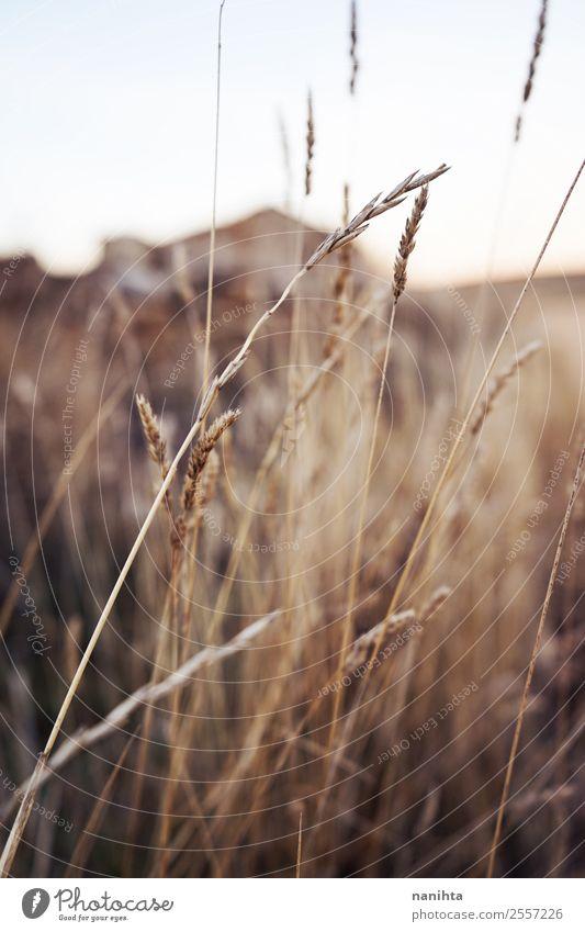 Schöne getrocknete Pflanzen im Herbst Umwelt Natur Sommer Schönes Wetter Blatt Grünpflanze Wildpflanze Feld ästhetisch dünn authentisch einfach frisch natürlich