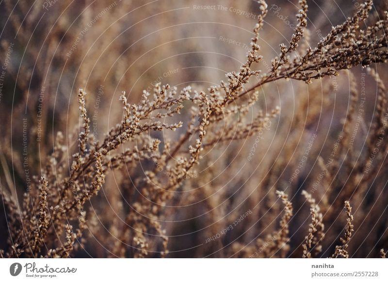 Getrocknete schöne Pflanzen im Herbst Umwelt Natur Sommer Grünpflanze Wildpflanze ästhetisch dunkel authentisch lang nah natürlich trocken Wärme braun gold