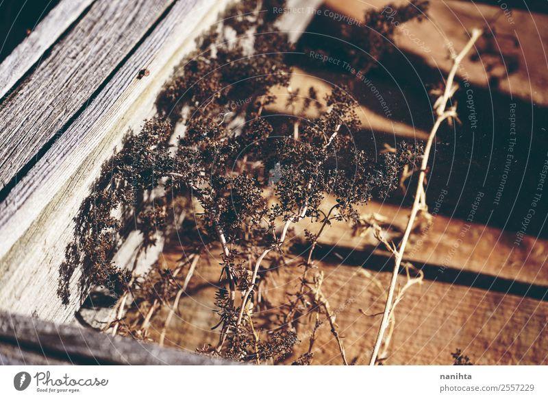 Getrocknete Pflanzen durch ein altes Fenster betrachtet Umwelt Natur Sommer Herbst Wildpflanze Holz Glas Kristalle Armut authentisch kaputt klein natürlich