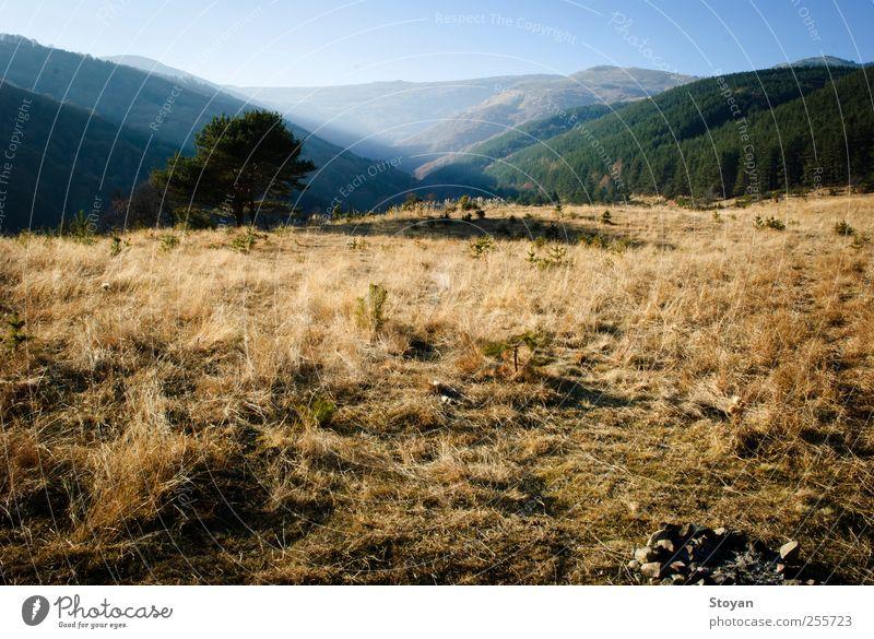 Vitosha Berglandschaft Natur Landschaft Pflanze Urelemente Luft Himmel Horizont Herbst Wetter Schönes Wetter Baum Gras Sträucher Moos Blatt Grünpflanze