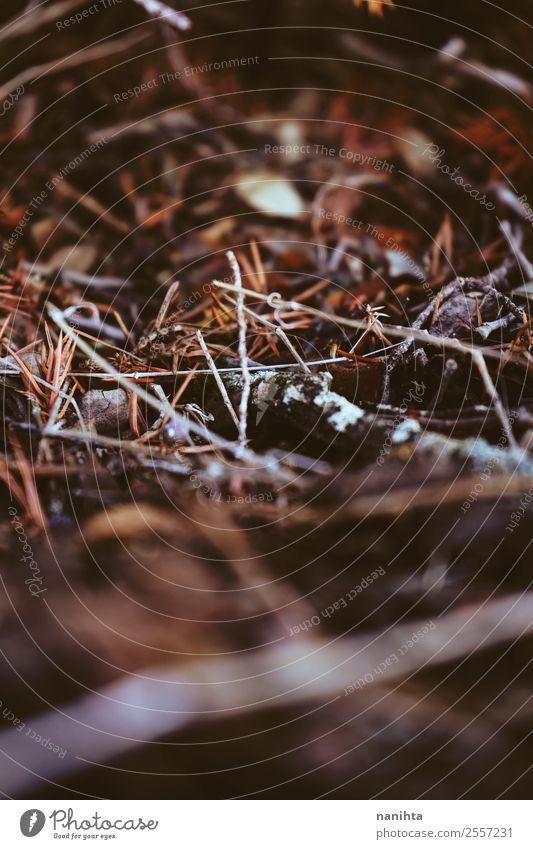 Abstrakte Makroaufnahme des Waldbodens im Herbst Umwelt Natur Pflanze Urelemente Erde Gras Moos Blatt Holz alt dunkel authentisch klein natürlich trocken Wärme