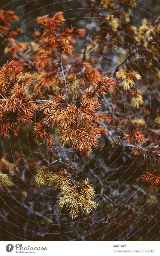 Herbstlich trockene Blätter im Wald Umwelt Natur Pflanze Baum Blatt Ast Holz dunkel authentisch exotisch natürlich wild braun gelb orange Konsistenz herbstlich