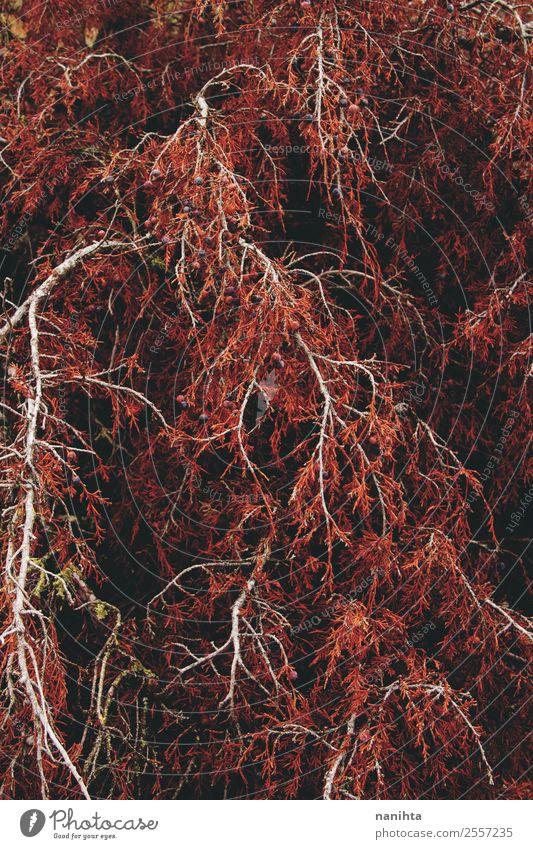 Rote organische Textur von einem Herbstbaum Umwelt Natur Klima Baum Blatt Grünpflanze Wildpflanze Wald Holz ästhetisch dunkel authentisch groß Unendlichkeit