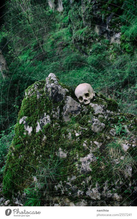 Natur Pflanze grün Landschaft Baum Berge u. Gebirge Umwelt Frühling natürlich Tod Felsen wild authentisch verrückt kaputt historisch