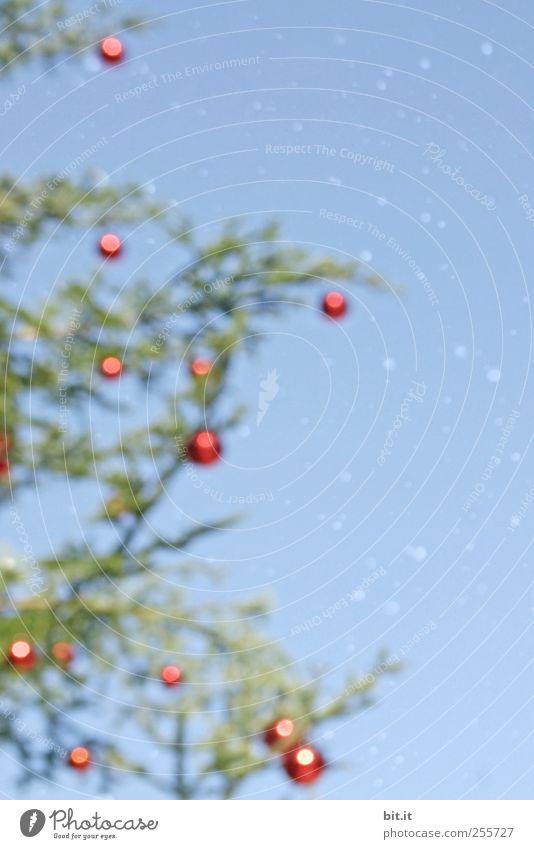 ich wünsch mir eine Brille... Feste & Feiern Weihnachten & Advent Umwelt Pflanze Himmel Winter Klima Schnee Schneefall Baum fallen glänzend hängen leuchten