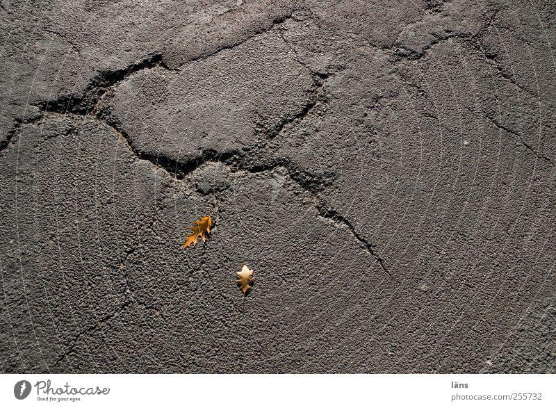 spuren Herbst Blatt Straße alt gelb grau Vergänglichkeit Wandel & Veränderung Asphalt Riss Farbfoto Außenaufnahme Strukturen & Formen Menschenleer