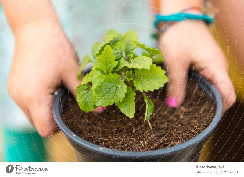 Kinderhände Kindererziehung Bildung Kindergarten lernen Umwelt Natur Pflanze Neugier pflanzen Erfahrung Kindheit Kinderhand Farbfoto Nahaufnahme