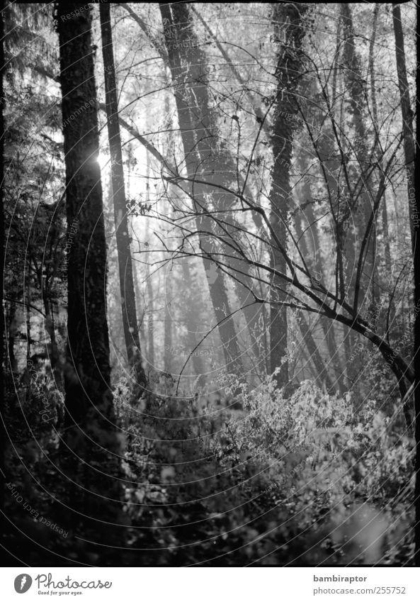 Alien Natur Baum Pflanze Wald Umwelt Wetter Sträucher zart analog exotisch zerbrechlich Geäst
