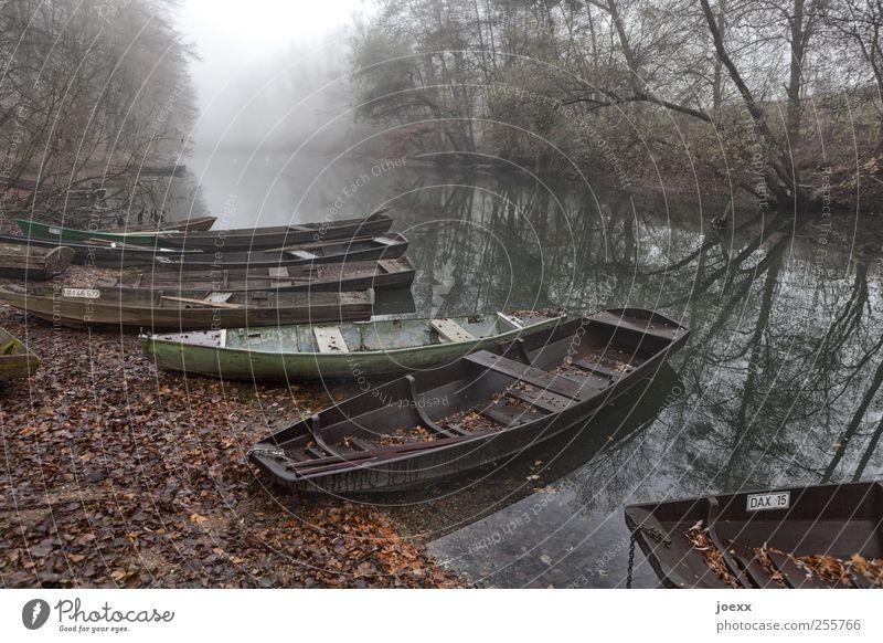 Fischerhafen alt Wasser weiß grün ruhig schwarz Wald Herbst braun Nebel Idylle Flussufer Anlegestelle Fischerboot
