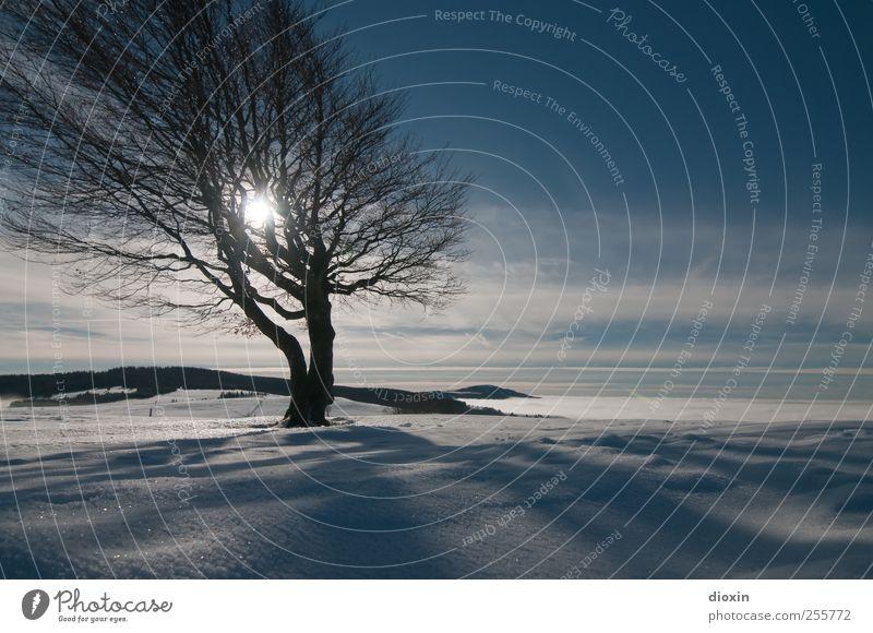 Winterland Ferien & Urlaub & Reisen Schnee Winterurlaub Berge u. Gebirge Himmel Wolken Sonnenlicht Schönes Wetter Eis Frost Pflanze Baum Baumstamm Ast Gipfel