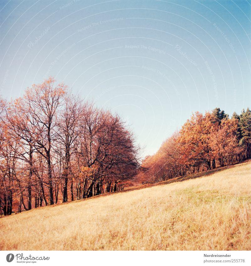 Jahreszeit Natur Pflanze ruhig Wald Erholung Herbst Wiese Landschaft Wege & Pfade Ausflug ästhetisch Wandel & Veränderung Vergänglichkeit Weide Schönes Wetter