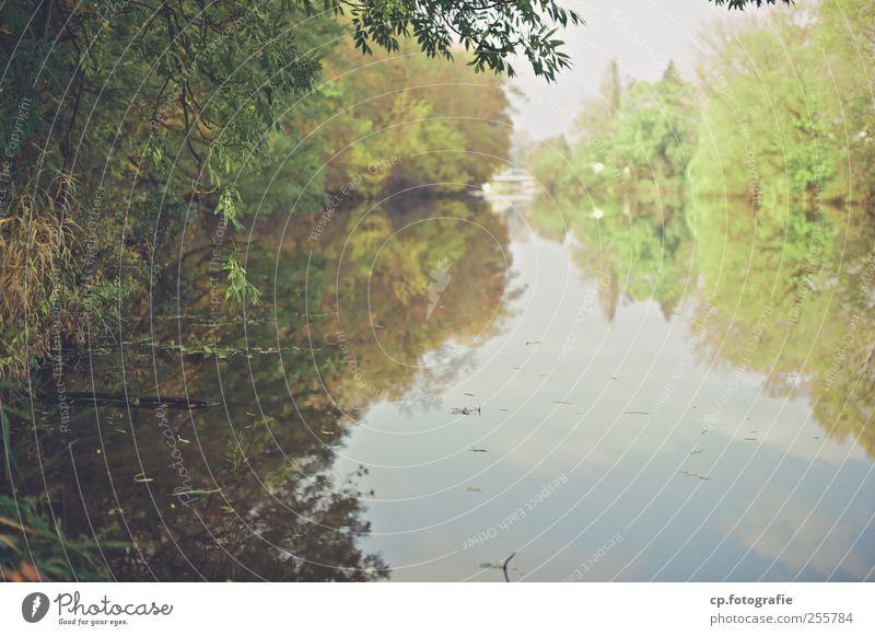 Kurz vor der Stadt Himmel Natur Wasser Baum Pflanze Herbst Landschaft natürlich Sträucher Fluss Schönes Wetter Flussufer Grünpflanze