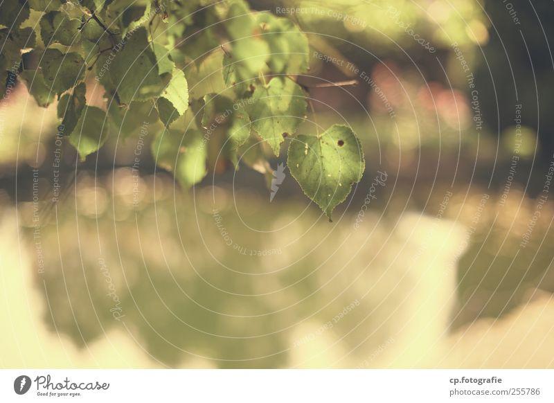 Grünes Herz Natur Wasser Baum Pflanze Sommer Blatt Herbst Garten Park natürlich Schönes Wetter Grünpflanze Linde