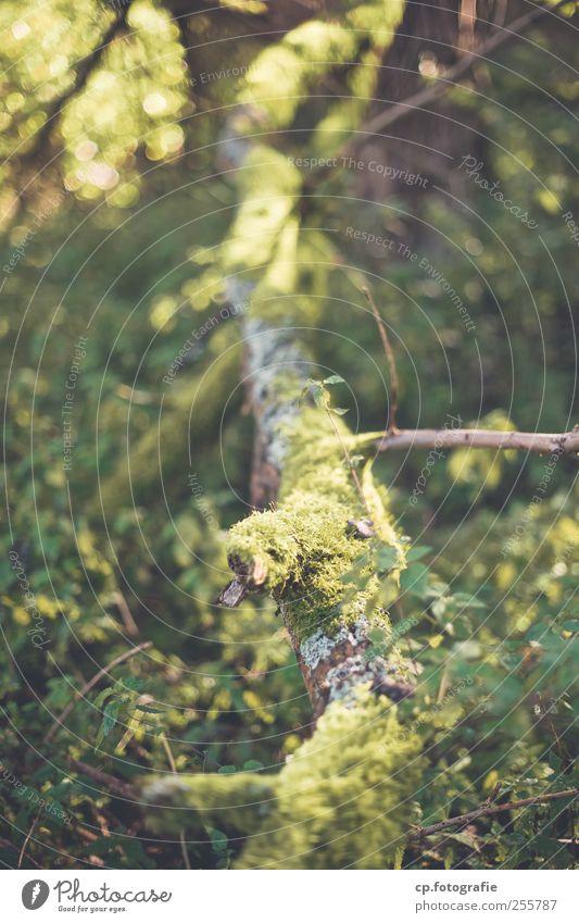 Vor der Stadt Natur Baum Pflanze Sommer Wald natürlich Grünpflanze Wildpflanze morsch