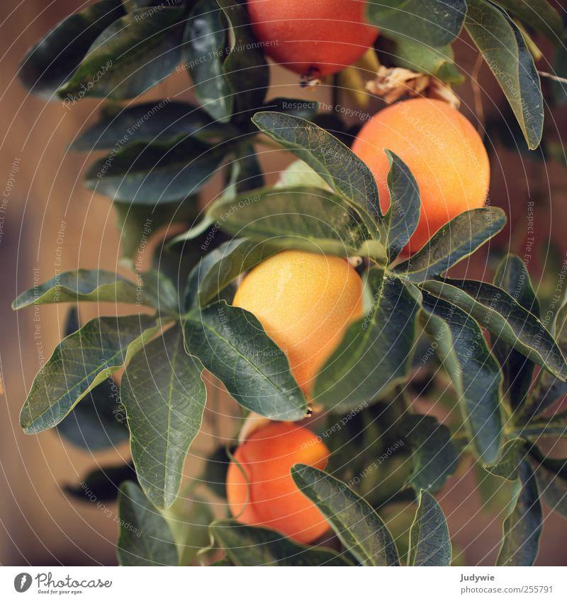 Passionsfrucht Umwelt Natur Sommer Wärme Pflanze Blatt exotisch Passionsblume Maracuja Blühend Wachstum natürlich grün ästhetisch Farbe orange Frucht fruchtig