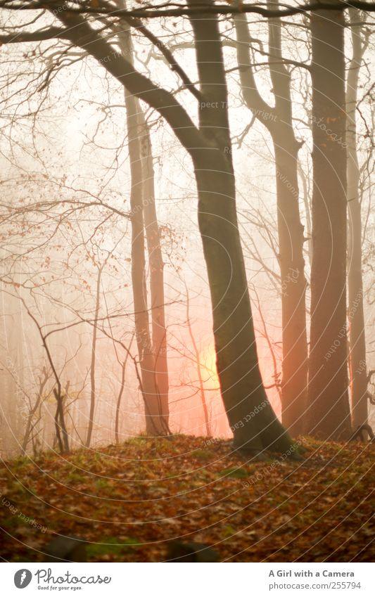 the fight against darkness Umwelt Natur Herbst Winter schlechtes Wetter Nebel Baum Blatt Wald leuchten dunkel Wärme wild Straßenbeleuchtung Gedeckte Farben