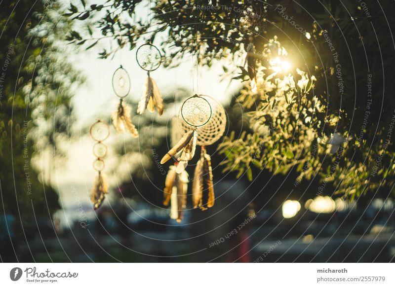 Traumfänger Ferien & Urlaub & Reisen Sommer Baum Erholung ruhig Gesundheit Frühling Garten Ausflug Zufriedenheit Park träumen Abenteuer Wind Feder